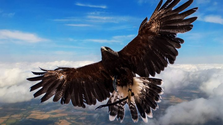 """""""The Hawk"""" by Ken MacGregor"""