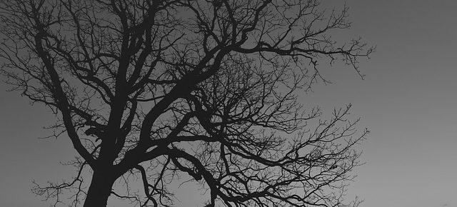tree-280126_640