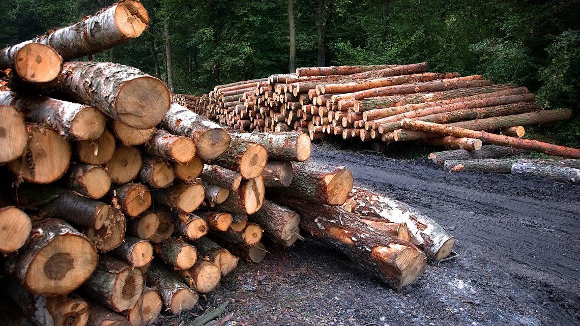The Laconic Lumberjack